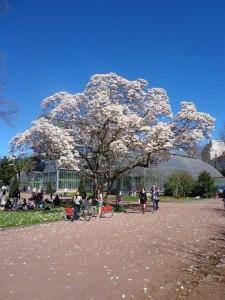 Lyon durante a primavera. Na foto, o Parc de la Tête d'Oro.