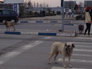 Cachorros de rua